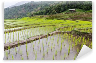 Selbstklebende Fototapete Reiskeimlinge auf den Reisterrassen