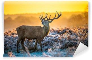 Selbstklebende Fototapete Rothirsch im Winter
