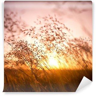 Selbstklebende Fototapete Trockene Grashalme in der Sonne