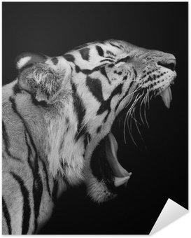 Selbstklebendes Poster Sumatra Tiger Roaring
