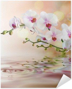Selbstklebendes Poster Weiße Orchideen auf dem Wasser mit Tropfen