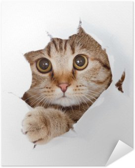 cat looking up in paper side torn hole isolated Self-Adhesive Poster