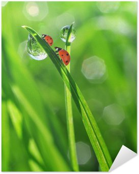 fresh morning dew and ladybirds Self-Adhesive Poster