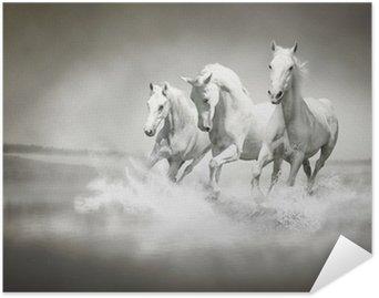 Herd of white horses running through water Self-Adhesive Poster