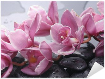 Self-Adhesive Poster Set of cattleya orchid flower and stone with water drops