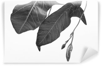 Black and white macrophoto of plant object with depth of field Self-Adhesive Wall Mural