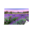 Sunset over a summer lavender field in Tihany, Hungary Self-Adhesive Wall Mural