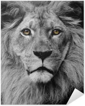 Självhäftande Poster Lion ögon