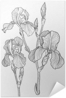 Självhäftande Poster Skiss av bukett av blommande iris
