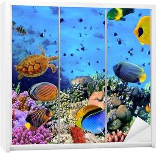 Skåpdekor Foto av en korall koloni