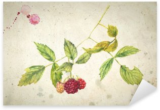 A branch of raspberry - realistic watercolor painting. On vintage beige background. Pixerstick Sticker