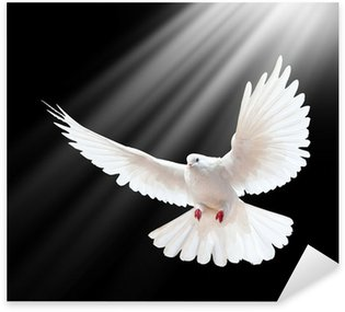 Sticker - Pixerstick A free flying white dove isolated on a black