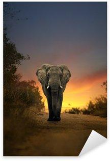 Sticker - Pixerstick african elephant walking in sunset