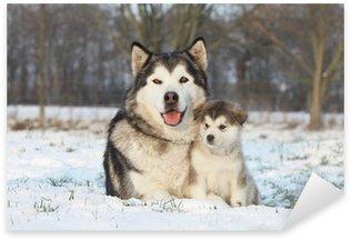 alaskan malamute et son bébé dans la neige Sticker - Pixerstick