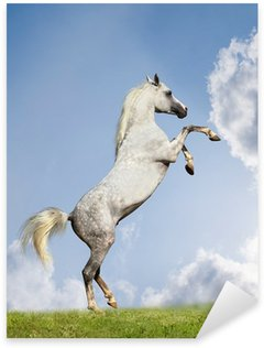 Sticker - Pixerstick arabian stallion rears