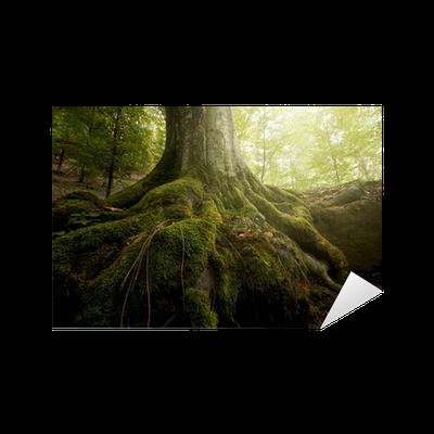Sticker arbre avec de la mousse sur les racines dans une for t verte au printemps pixers - Mousse sur les arbres ...