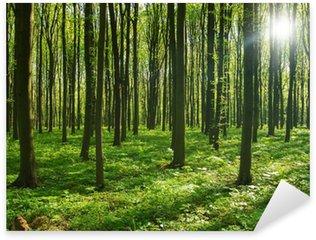 Sticker Pixerstick Arbres de la forêt. nature vert bois soleil milieux.