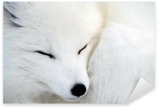 Sticker Pixerstick Arctic fox