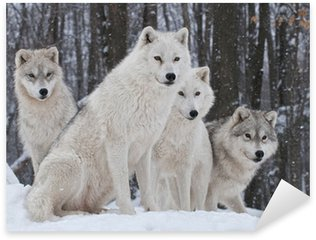 Sticker - Pixerstick Arctic Wolf Pack