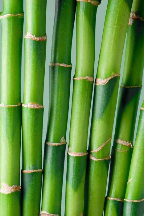 Sticker - Pixerstick Bamboo - Themes