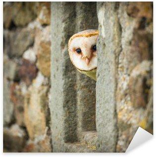 Sticker Pixerstick Barn Owl oiseau