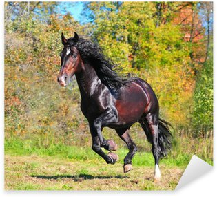 Sticker - Pixerstick bay andalusian horse stallion in action