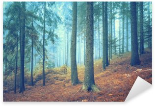 Sticker - Pixerstick Beautiful dreamy conifer forest. Color filter effect used.