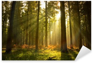 Beautiful Forest Sticker - Pixerstick