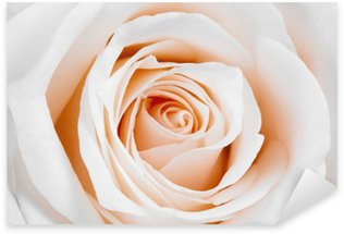 Beautiful white rose. Sticker - Pixerstick