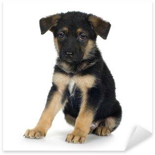 Sticker Pixerstick Berger allemand (7 semaines) / alsacien, chien policier