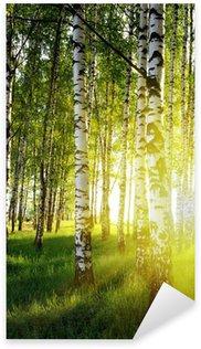 Pixerstick Sticker Berk bomen in een zomer bos