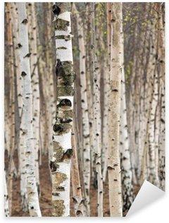 Pixerstick Sticker Berken bomen in het voorjaar