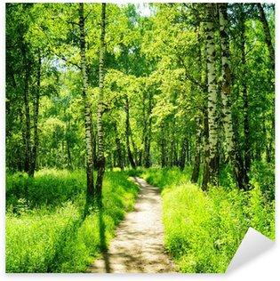Pixerstick Sticker Berken bos op een zonnige dag. Groene bossen in de zomer