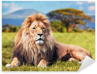 Sticker - Pixerstick Big lion lying on savannah grass. Kenya, Africa