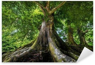 Sticker Pixerstick Big vieil arbre