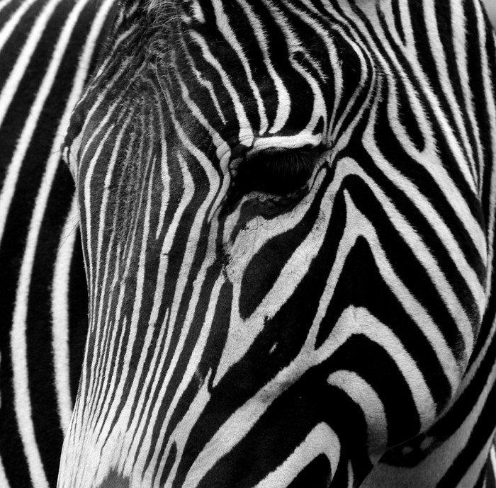Sticker - Pixerstick black-and-white - Styles