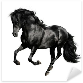 Sticker - Pixerstick black horse runs gallop isolated on white backgrond