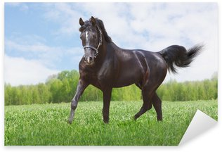 Sticker - Pixerstick black horse