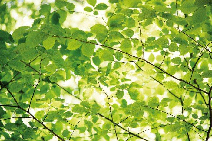 Sticker - Pixerstick Blätter - Trees