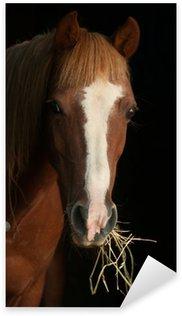 Sticker Pixerstick Châtaignier poney regardant l'écurie