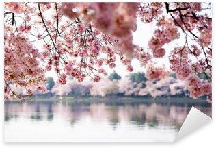 Cherry Blossoms over Tidal Basin in Washington DC Sticker - Pixerstick