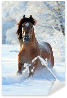 Sticker Pixerstick Cheval bai courir en hiver