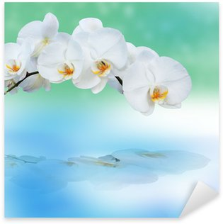 Sticker - Pixerstick Close up of orchids with reflection.
