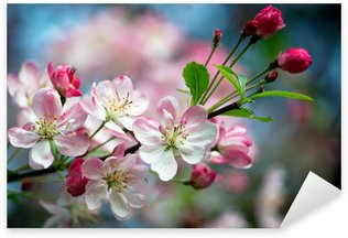 Close-up photo of apple blossoms Sticker - Pixerstick