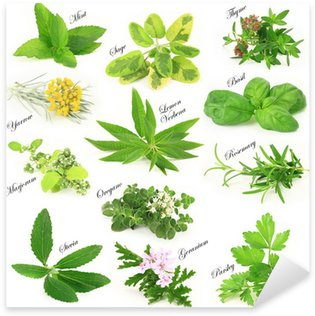 Collection of fresh aromatic herbs Sticker - Pixerstick