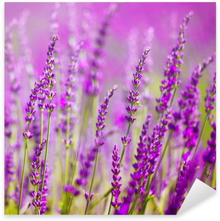 Pixerstick for All Surfaces Colorful lavender flower