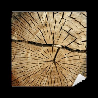 coupe de tronc d 39 arbre sticker pixers we live to change. Black Bedroom Furniture Sets. Home Design Ideas