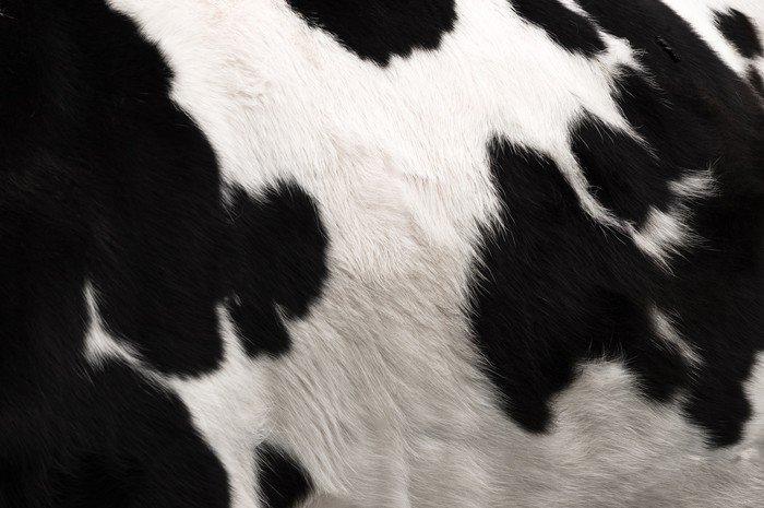 Sticker - Pixerstick Cow hide print - Animals