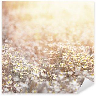 Daisy meadow Sticker - Pixerstick