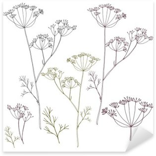Dill or fennel flowers and leaves. Sticker - Pixerstick